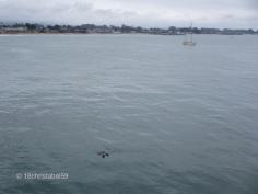Santa Cruz Harbour with Fishotters