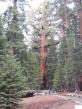 Grizzly Giant - größer als die Freiheitsstatue