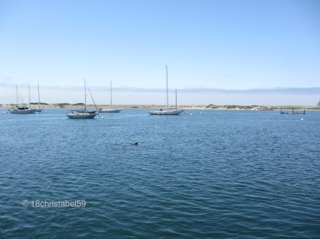 Morro Bay mit Seelöwen