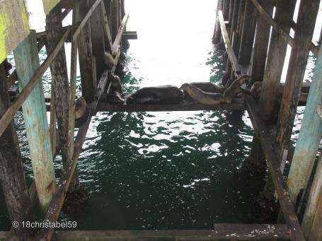 Santa Cruz Seals
