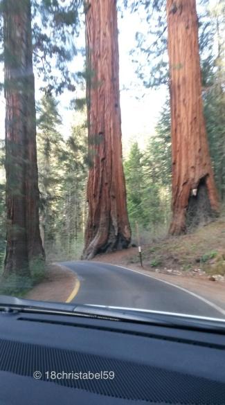 Einfang/ Ausfahrt in den Sequoia National Parl
