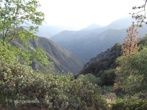 im Sequoia