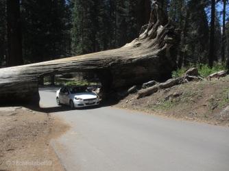 Tunnel Log