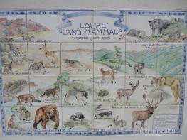 Fauna Californae