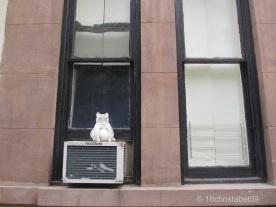 New York: Die Mieze auf der Klima.