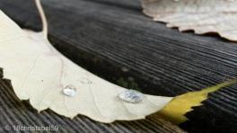 Wasserperlen auf Goldblatt