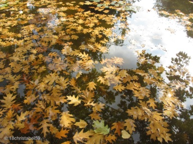 Goldcollage im Teich