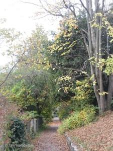 Botanischer Garten 3