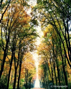 Lauf der Natur