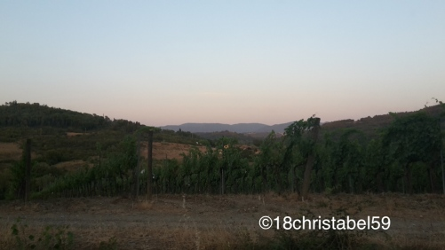 Weinberge der Toscana