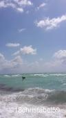 Miami Beach mit Pelikan am Abtauchen