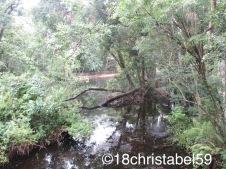 Suchbild: Wo ist der Alligator?