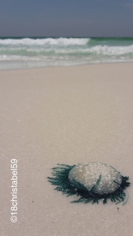 Grayton Beach - Matschequalle