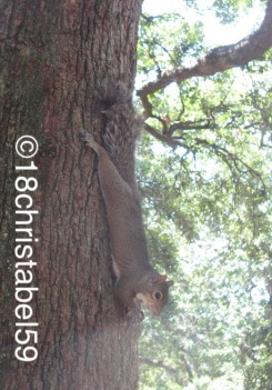 Fettes Eichhörnchen