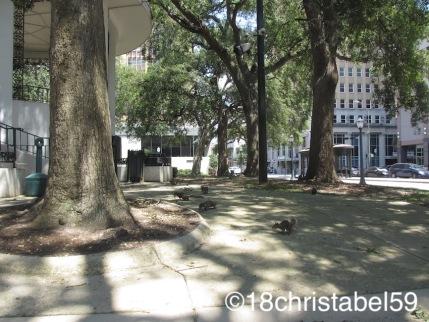 Belleville Square und seine Eichhörnchen