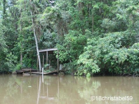 ...von Katrina angeschwemmt...