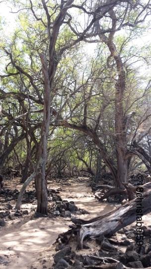 Lava Fields Kings Trail